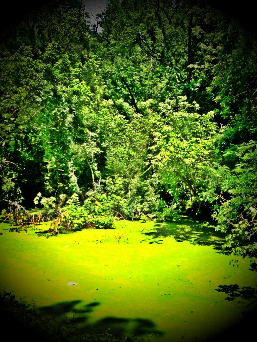 Algae in HD