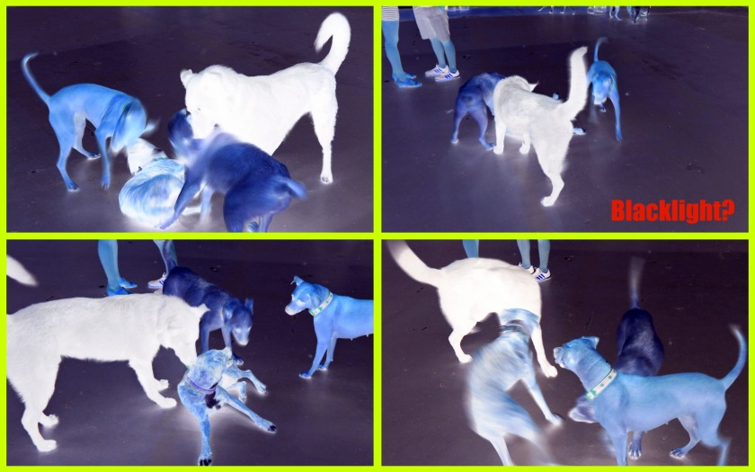 Blacklight dog fight!