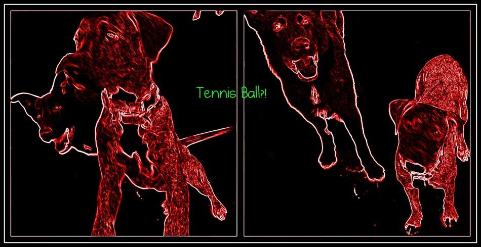 Neon tennis ball bounce