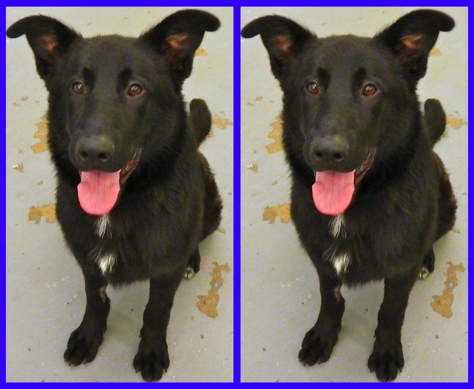Sparky black dog - Pet Adoption