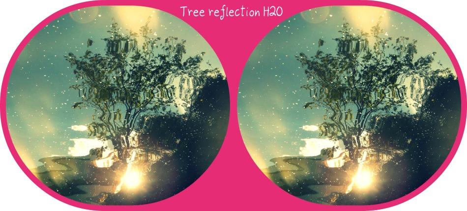 A trees reflection...