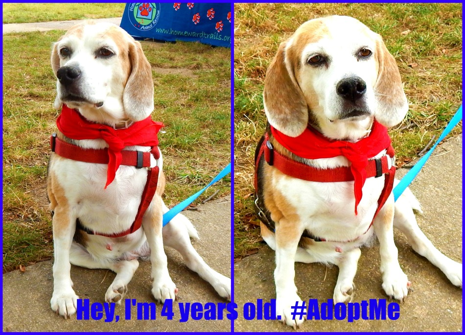 Who wants a fully trained 4-year old - Pet Adoption