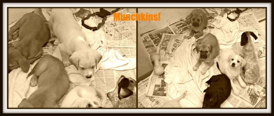 4 week old puppies - Pet adoption
