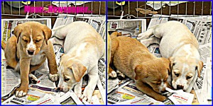 puppies newspaper