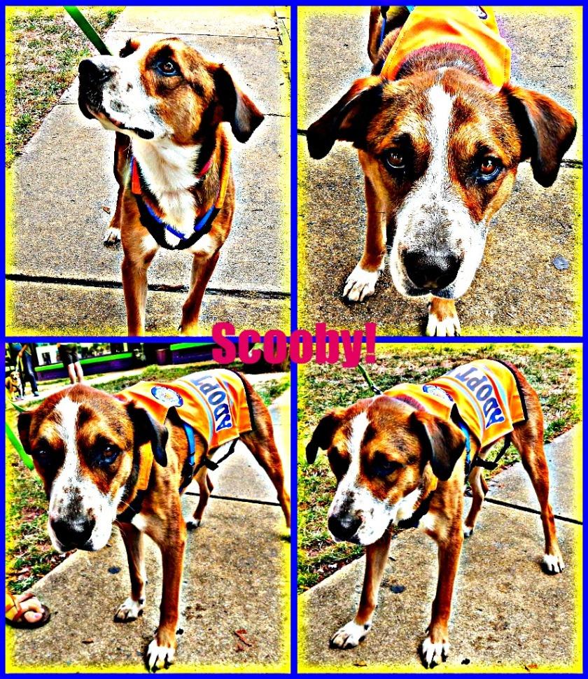 Scooby Snacks?? - Pet Adoption