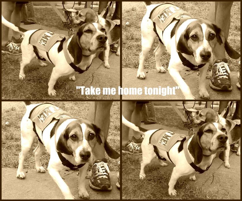 Weinner dog - Pet Adoption