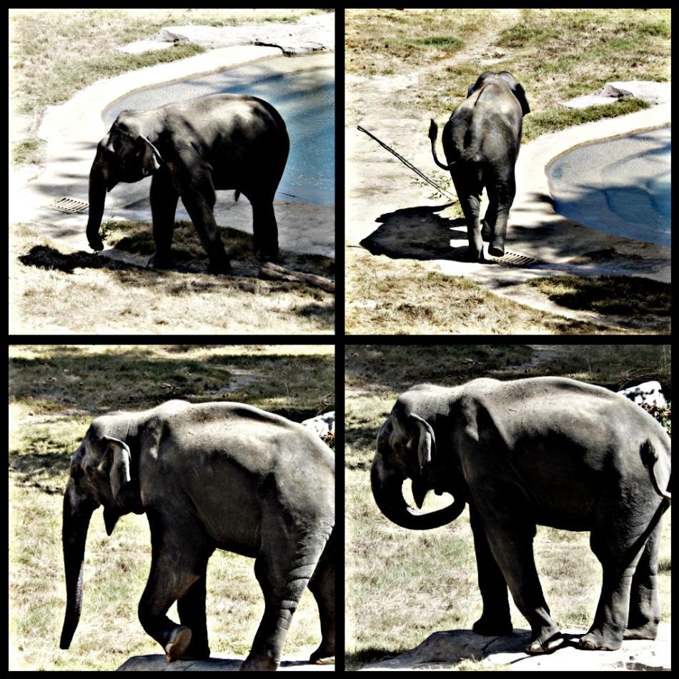 Elephants - best shot