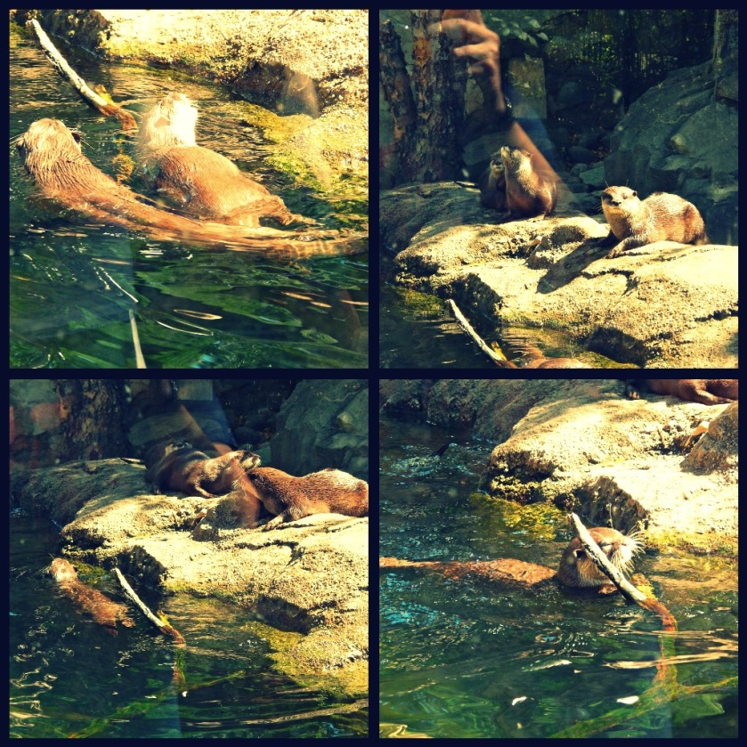 The Otters!