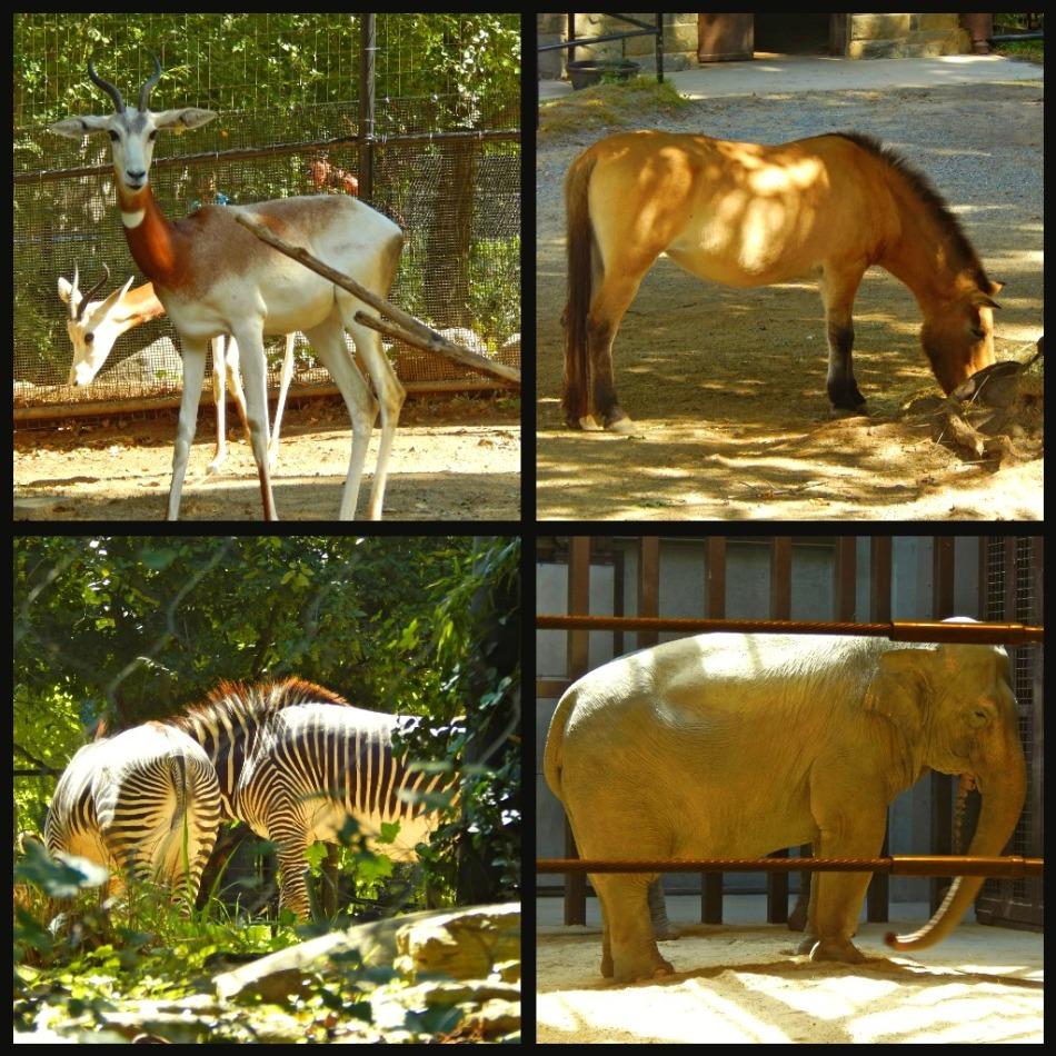 Horse, Zebra, Elephant