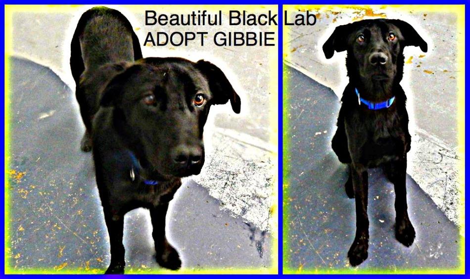 Gibbie!
