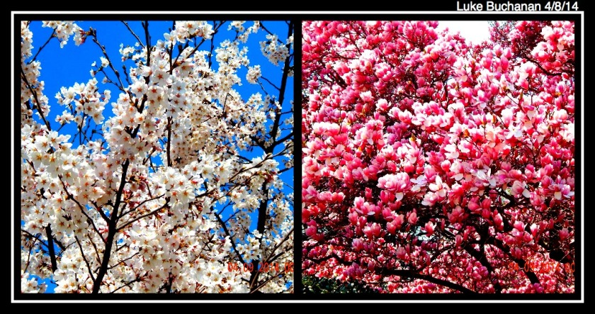 Cherry Blossom Festival 2014 - Pink & White Pedals