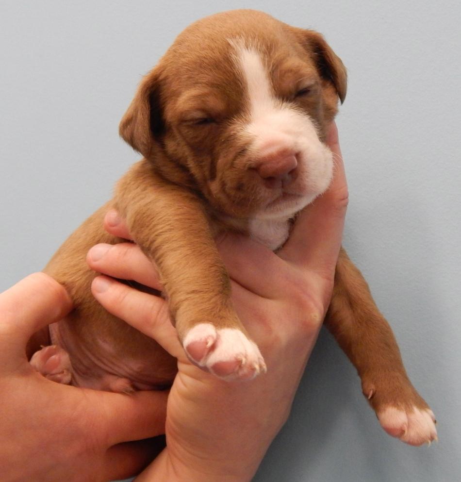 dog7d.https://www.petfinder.com/petdetail/30786314